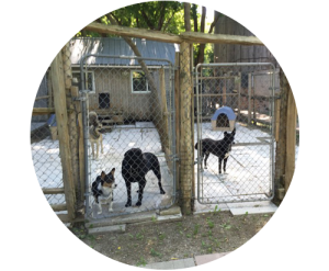 kennel_groups