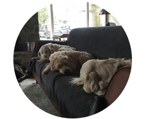sleeping_trio