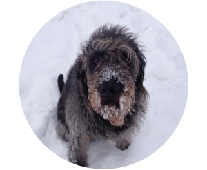 snowy_Ben